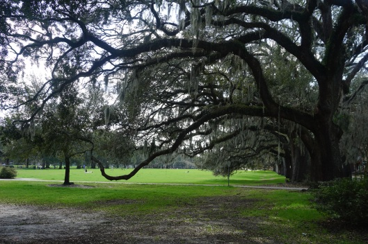Savannah 6
